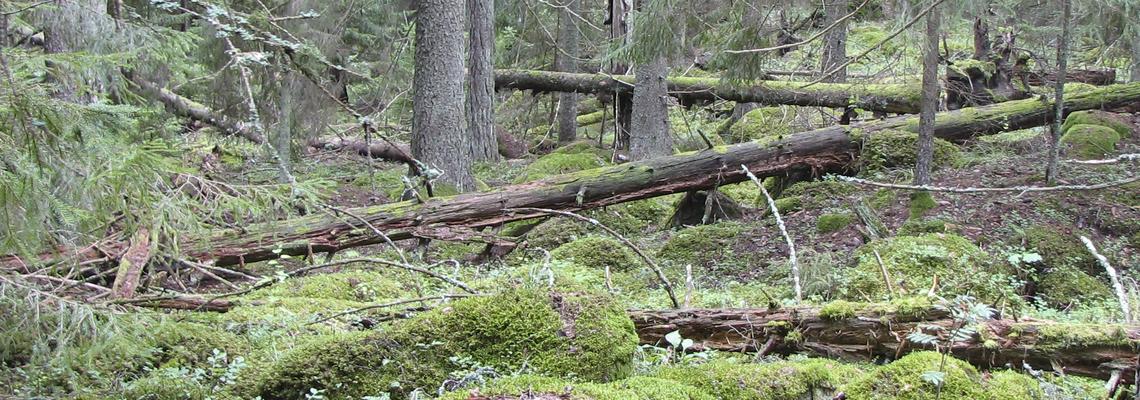 eu bidrag skog