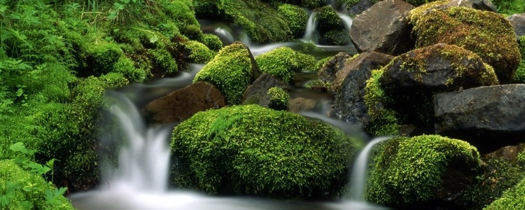 Beautiful stream in mountain. Green grass cover stones