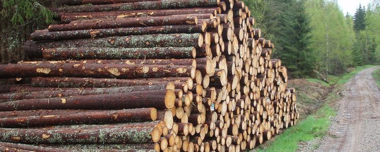 sälja träd på rot