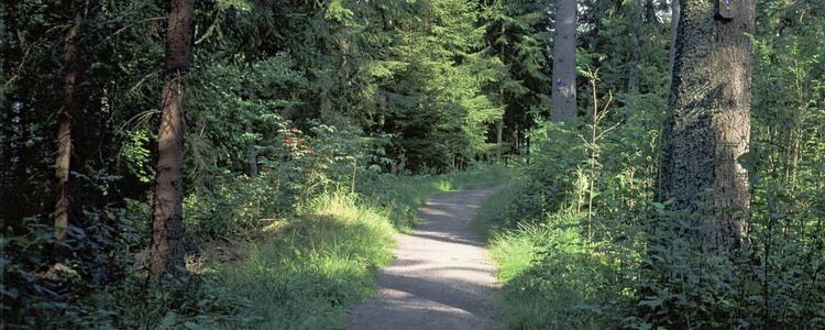 skog par söker man)