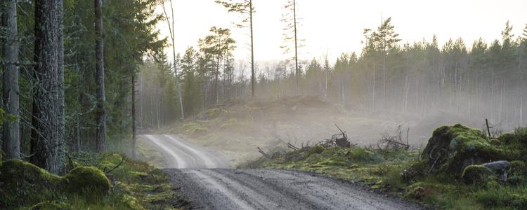 Minskat anslag for inkop av skog