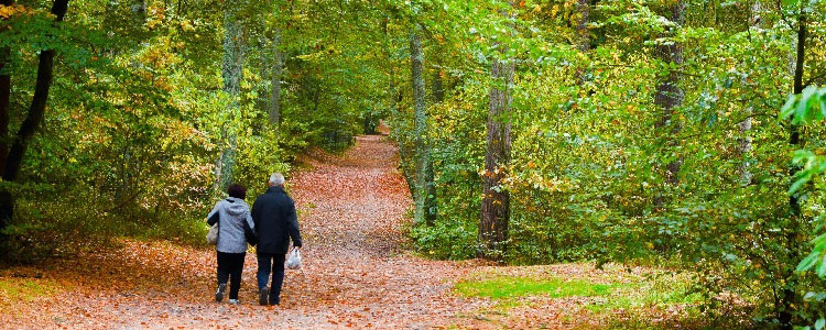 Two people walking in the forest in pilot area Vistula Spit.